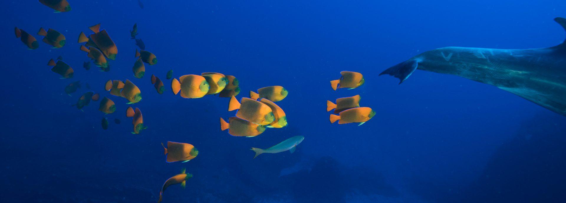 The Azul Ocean